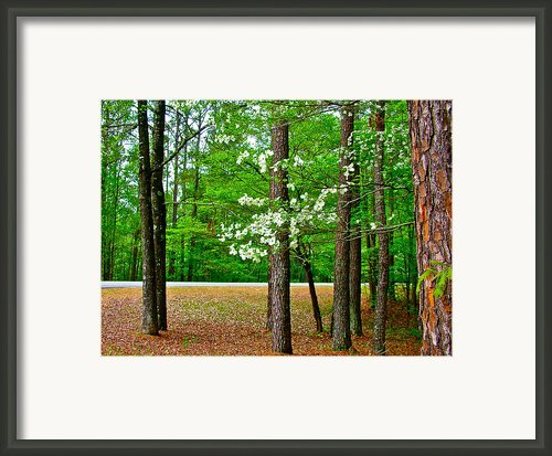 Dogwood On The Parkway At Mile 199 On Natchez Trace Parkway-ms Framed Print By Ruth Hager