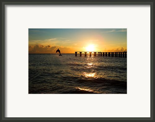 Dolphin Jumping Out Of The Sea In Florida Framed Print By Fizzy Image