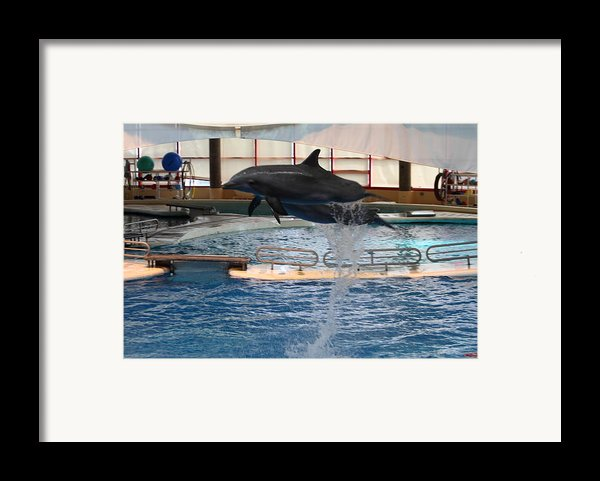 Dolphin Show - National Aquarium In Baltimore Md - 1212249 Framed Print By Dc Photographer