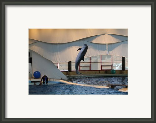 Dolphin Show - National Aquarium In Baltimore Md - 121255 Framed Print By Dc Photographer