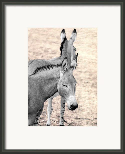 Donkeyflected Framed Print By Bill Tiepelman
