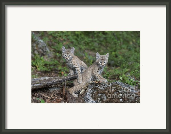 Double Trouble Framed Print By Sandra Bronstein