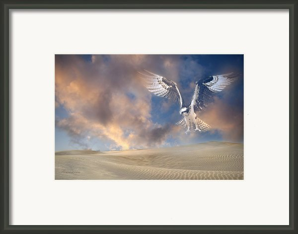 Dream Hawk Framed Print By Zeana Romanovna