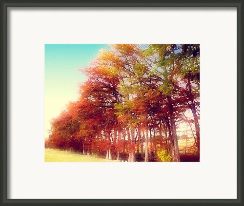 Dream Trees Framed Print By Wendy J St Christopher