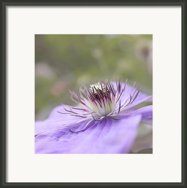 Dreaming Framed Print By Kim Hojnacki