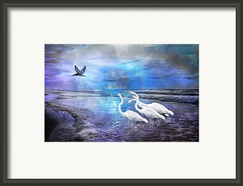 Dreaming Of Egrets By The Sea Iii Framed Print By Betsy A Cutler Islands And Science