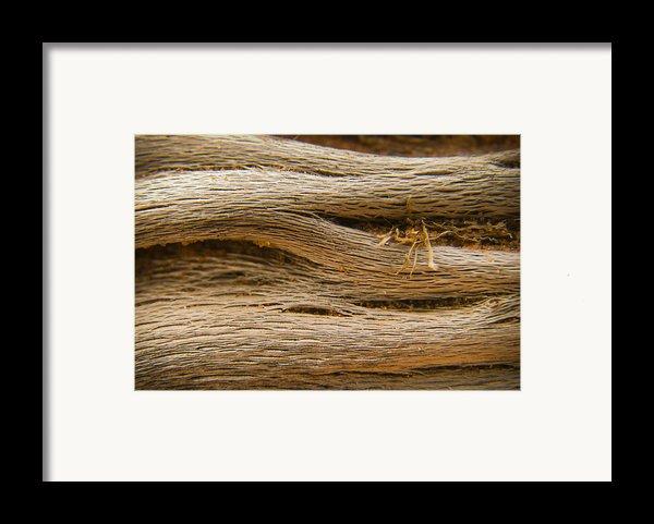 Driftwood 1 Framed Print By Adam Romanowicz
