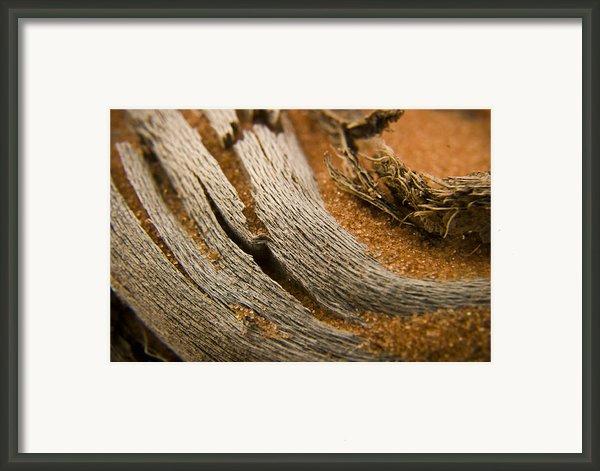 Driftwood 2 Framed Print By Adam Romanowicz