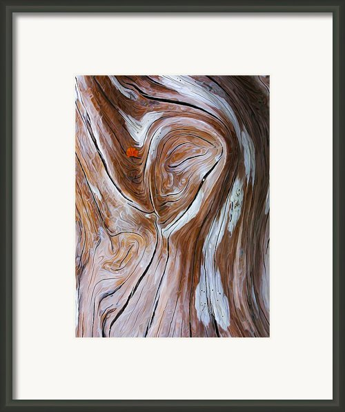 Driftwood 6 Framed Print By Abeautifulsky  Photography