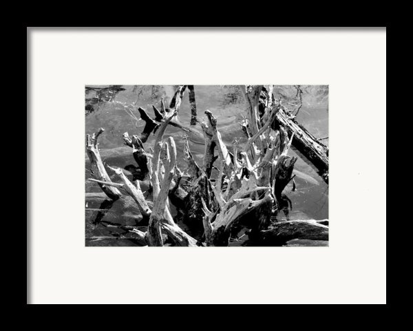 Driftwood On Lost Lake Framed Print By Michelle Calkins