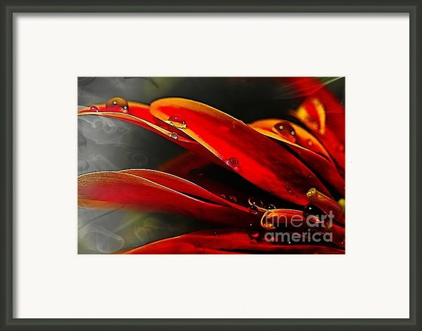 Drop Dead Red Framed Print By Wobblymol Davis