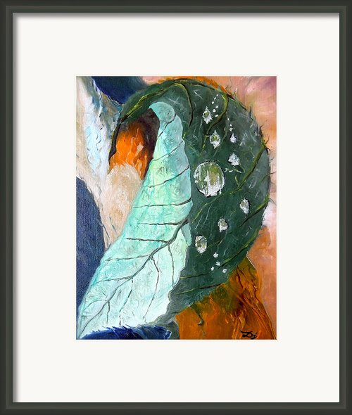 Drops On A Leaf Framed Print By Daniel Janda