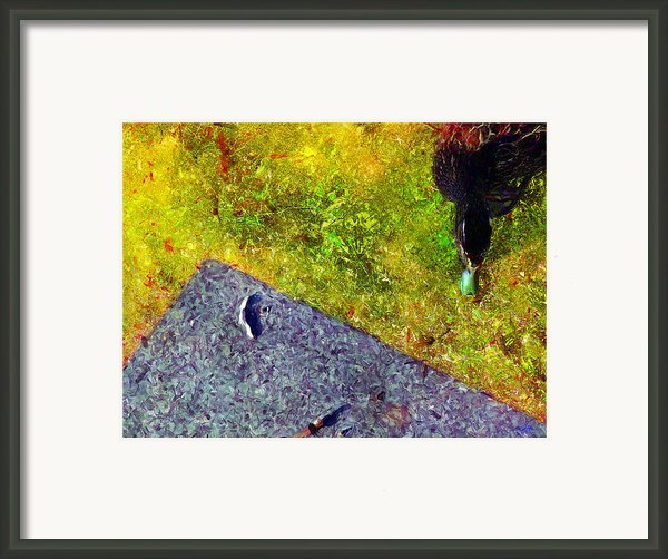 Duck A La Cement Framed Print By Carl Rolfe
