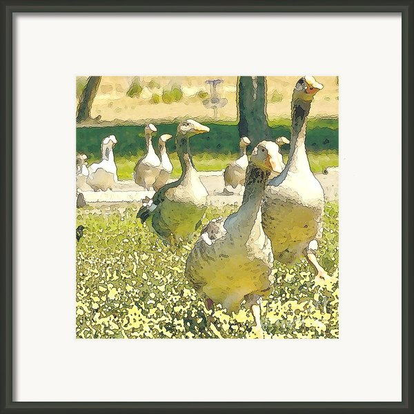 Duck Duck Goose Framed Print By Artist And Photographer Laura Wrede
