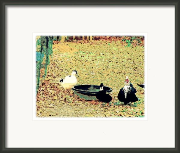 Ducky Afternoon Framed Print By Yomamabird Rhonda