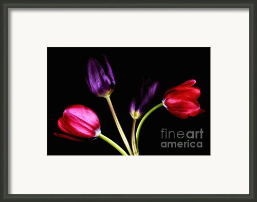 Dutch Framed Print By Mark Johnson
