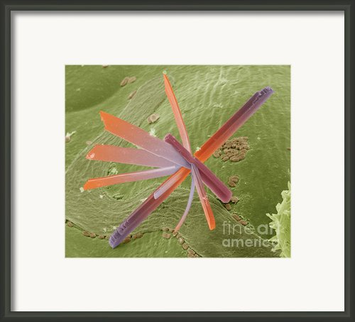 E8400300 - Pesticide Framed Print By Spl