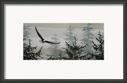 Eagle And Cedars Framed Print By James Williamson