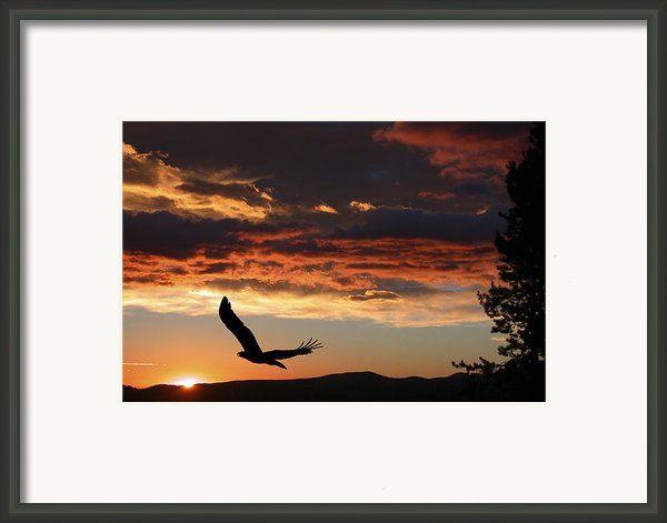 Eagle At Sunset Framed Print By Shane Bechler
