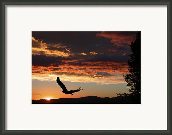 Eagle At Sunset Framed Print By Shane Bechler