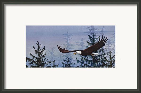 Eagles Freedom Framed Print By James Williamson