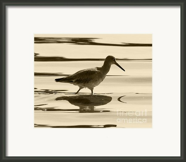 Early Morning In The Moss Landing Harbor Picture Of A Willet Framed Print By Artist And Photographer Laura Wrede
