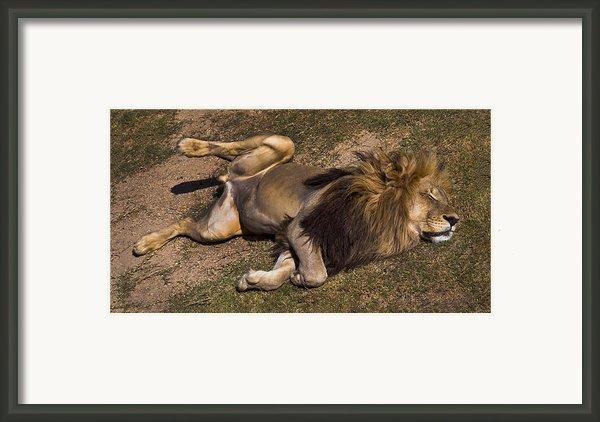 El Rey Framed Print By Skip Hunt
