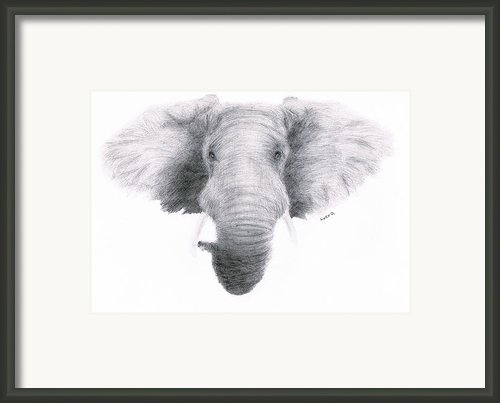 Elephant Framed Print By Lucy D