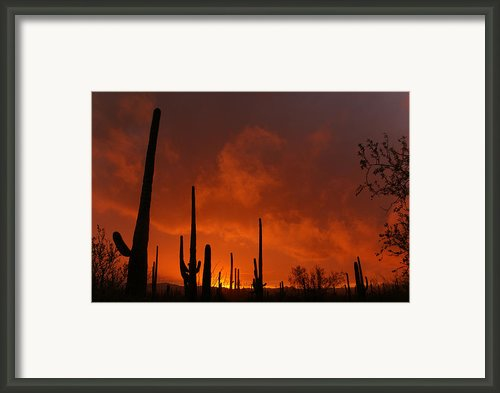 Embers Of The Day Framed Print By Justin  Curry