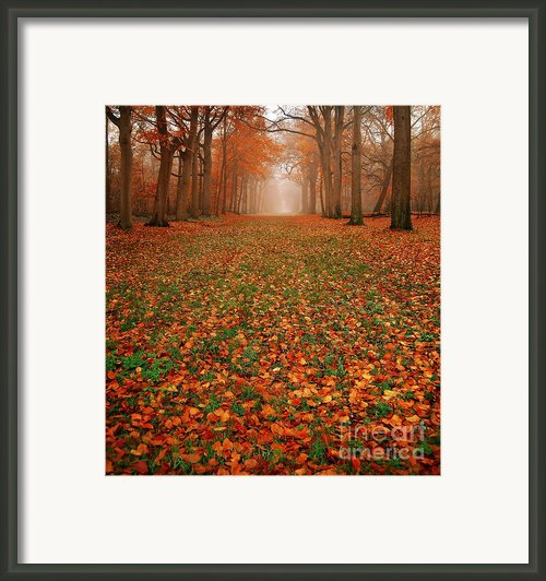 Endless Autumn Framed Print By Photodream Art