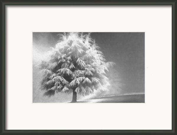 Enlightened Tree Framed Print By Don Schwartz