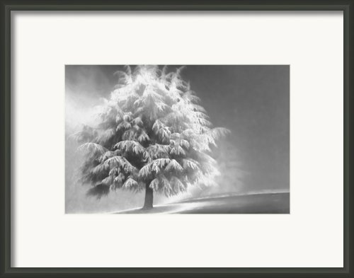 Enlightened Tree Framed Print By Don Schwartz