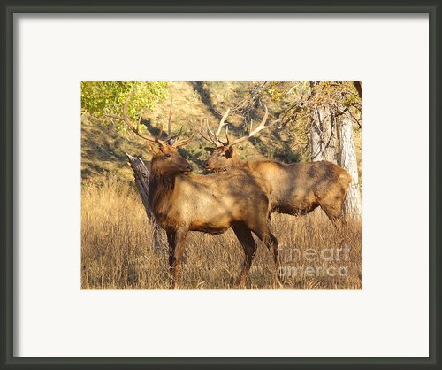 Evening Sets On The Elk Framed Print By Robert Frederick
