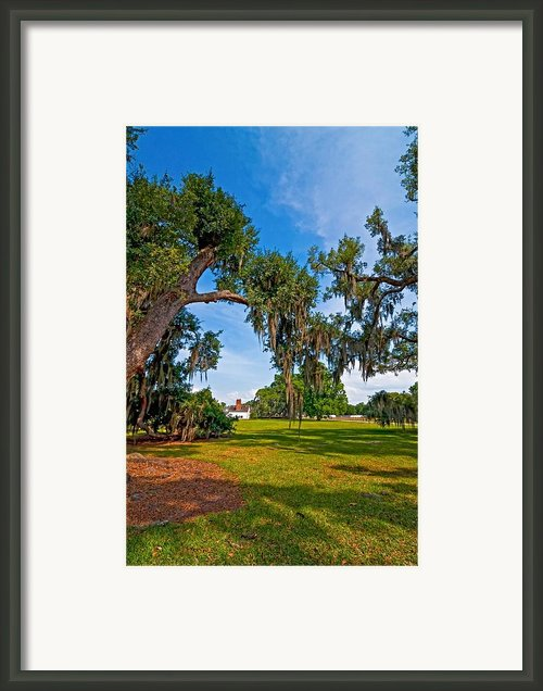 Evergreen Plantation Ii Framed Print By Steve Harrington
