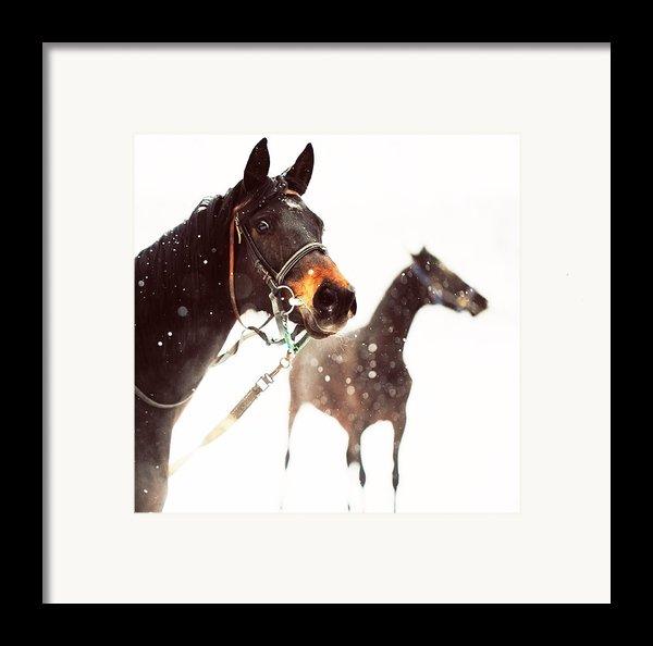 Everyone Has A Dream Framed Print By Jenny Rainbow
