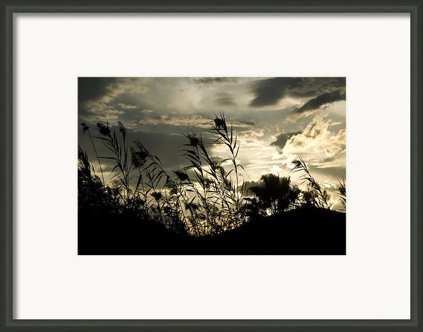Excitement Framed Print By Catalina Lira