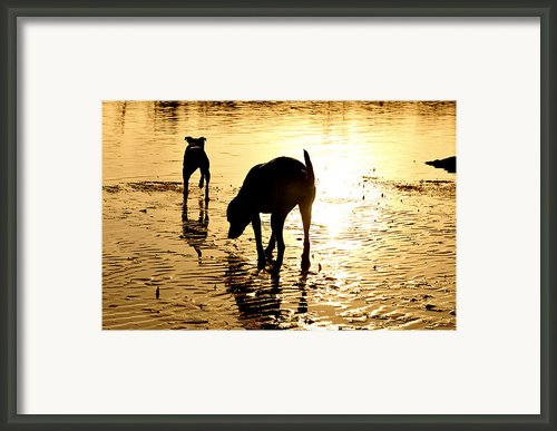 Exploring At Sunset Framed Print By Laura  Fasulo