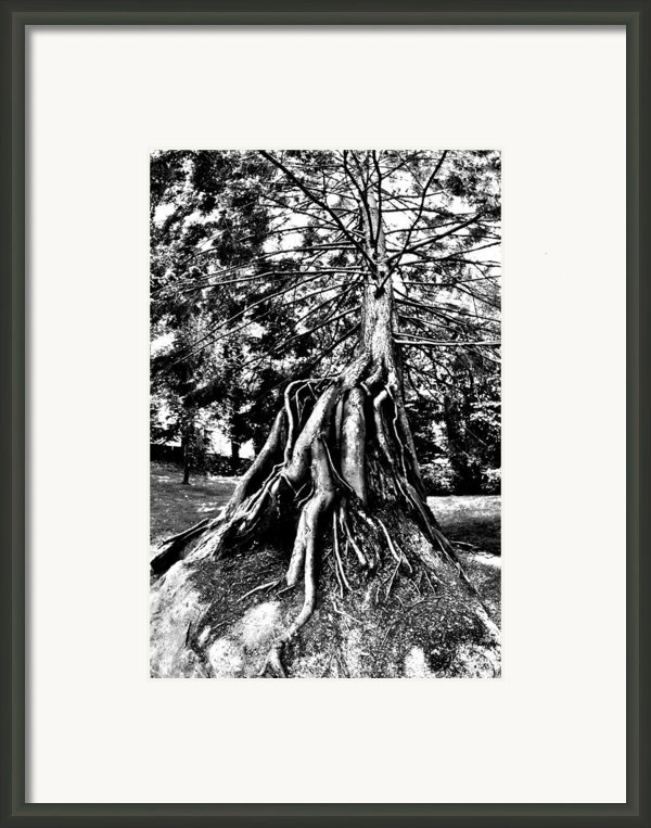 Exposed Framed Print By Benjamin Yeager