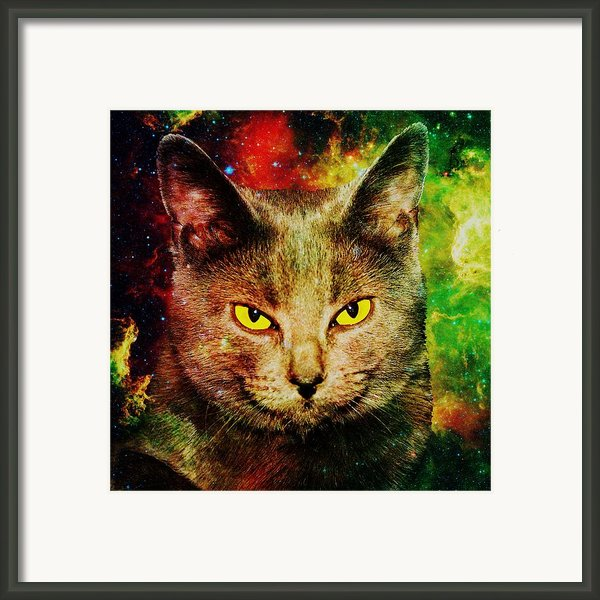 Eye Contact Framed Print By Anastasiya Malakhova