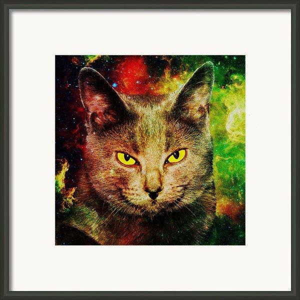 Eye Contact Framed Print By Anastasiya Malakhova