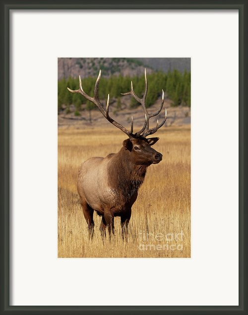 Eyeing The Harem Framed Print By Sandra Bronstein