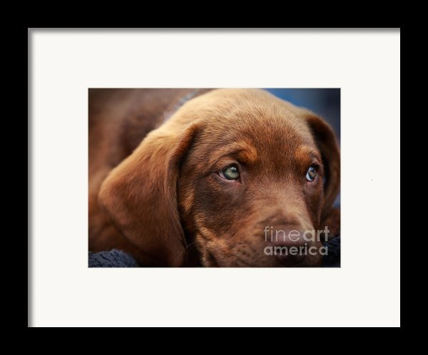 Eyes Are The Window To The Soul Framed Print By Mary Lou Chmura