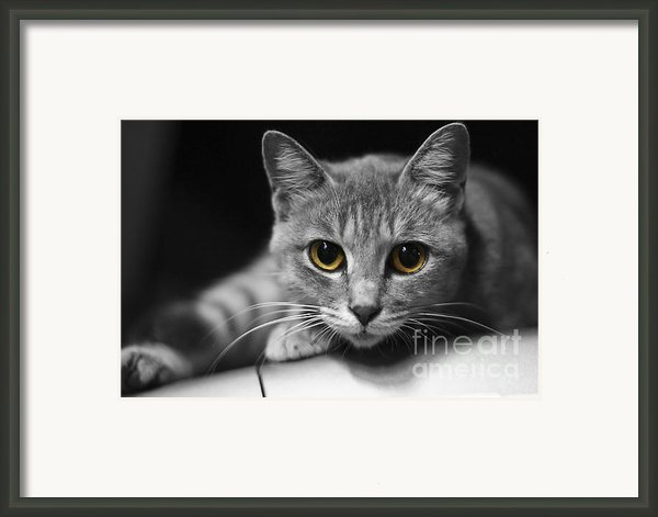 Eyes Open Wide Framed Print By Jiangang Wang