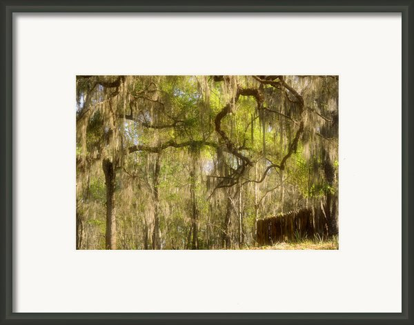 Fabulous Spanish Moss Framed Print By Christine Till