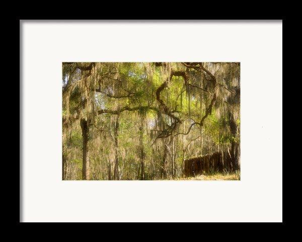 Fabulous Spanish Moss Framed Print By Christine Till