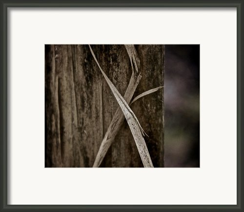 Fading Ribbon Framed Print By Odd Jeppesen