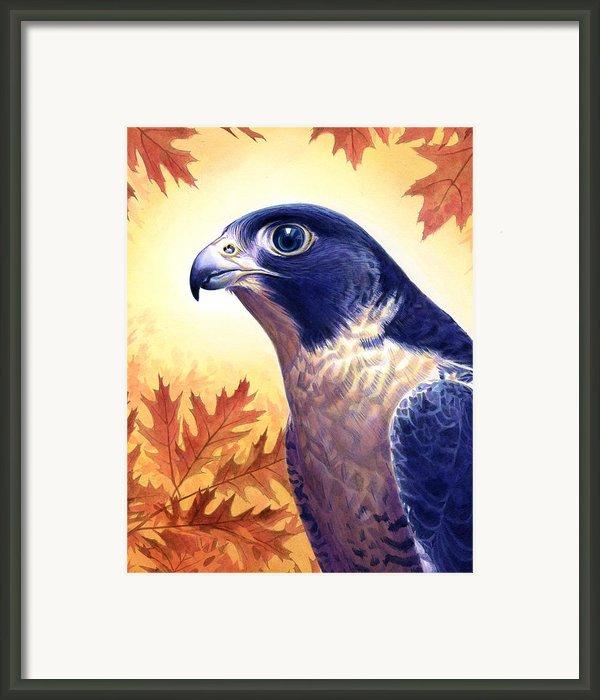Falcon Framed Print By Alan  Hawley