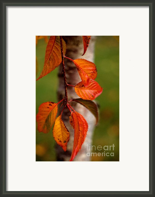Fall Beauty Framed Print By Sharon Elliott