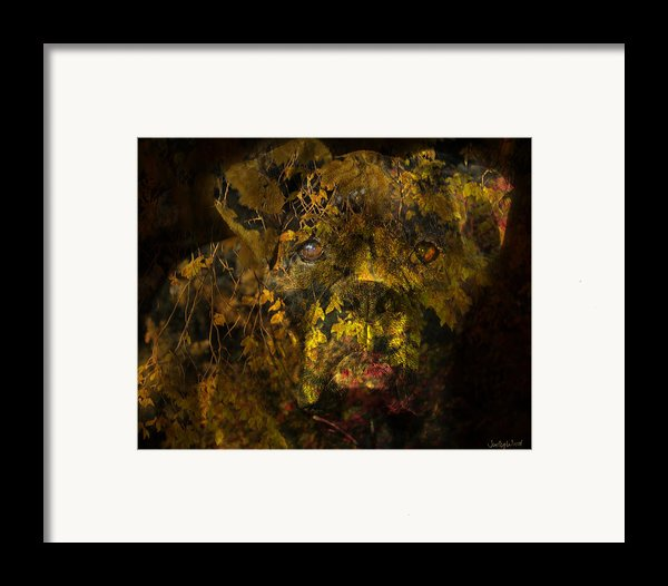 Fall Boxer Framed Print By Judy Wood