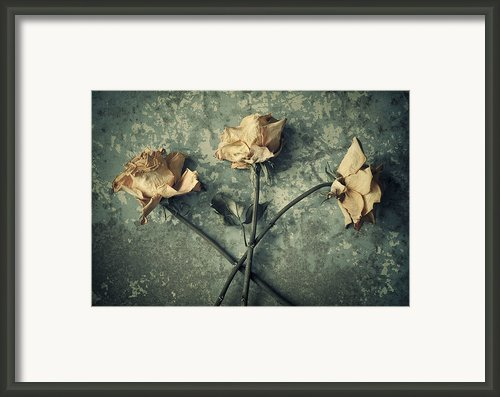 Fall From Grace Framed Print By Amy Weiss